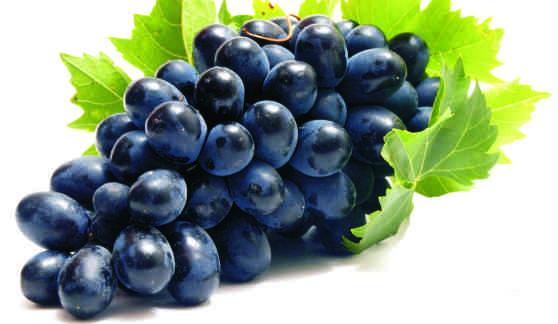 vörös szőlő